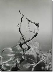 minor white cypress grove trail
