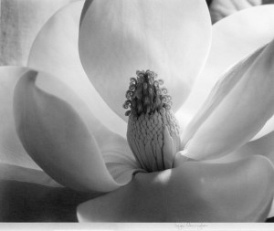 Magnolia Blossom, 1925