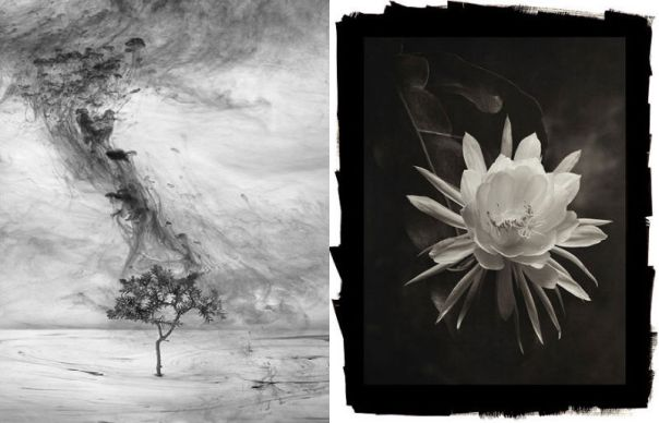 From left to right: Departure 4 (2010), Van Chu; Queen of the Night (2012), Cy DeCosse