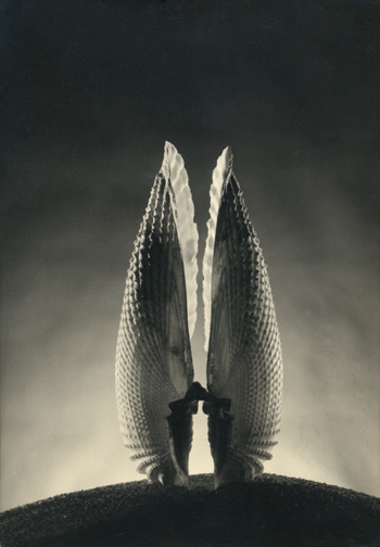 Angel Wings, Ruth Bernhard, 1943