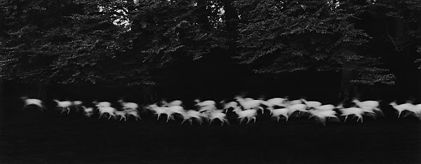Running White Deer, Wicklow County, Ireland 1967, Paul Caponigro