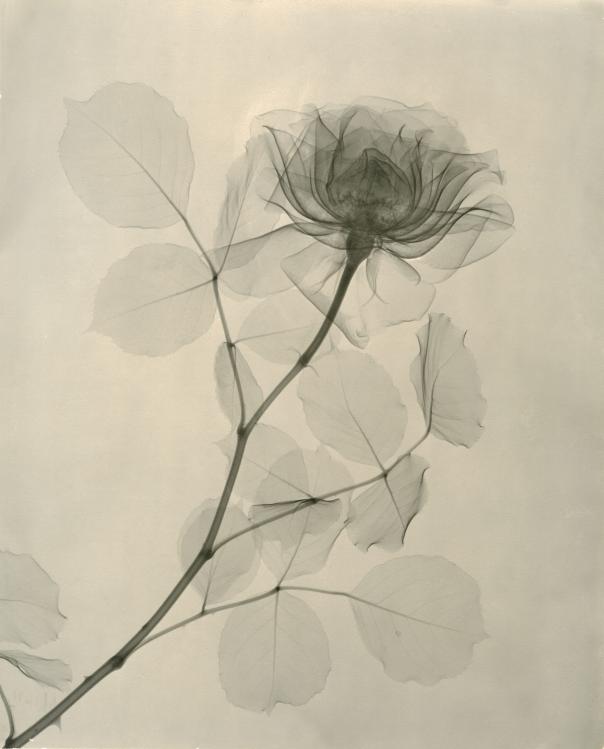 By, Dr. Dain L. Tasker, Image Courtesy of Joseph Bellows Galler